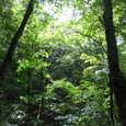 ミニ白神 ブナの森